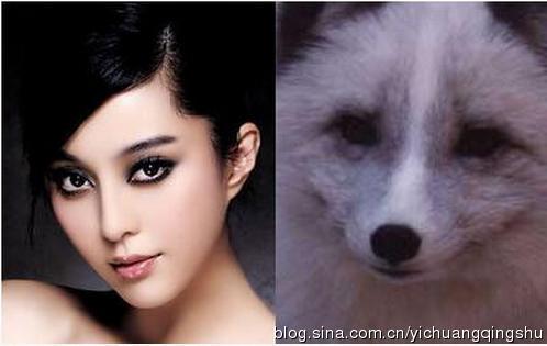 和动物撞脸的明星 范冰冰似狐狸汪涵似猫头鹰