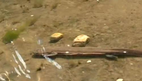 张家界:金鞭溪成大鲵主题游道