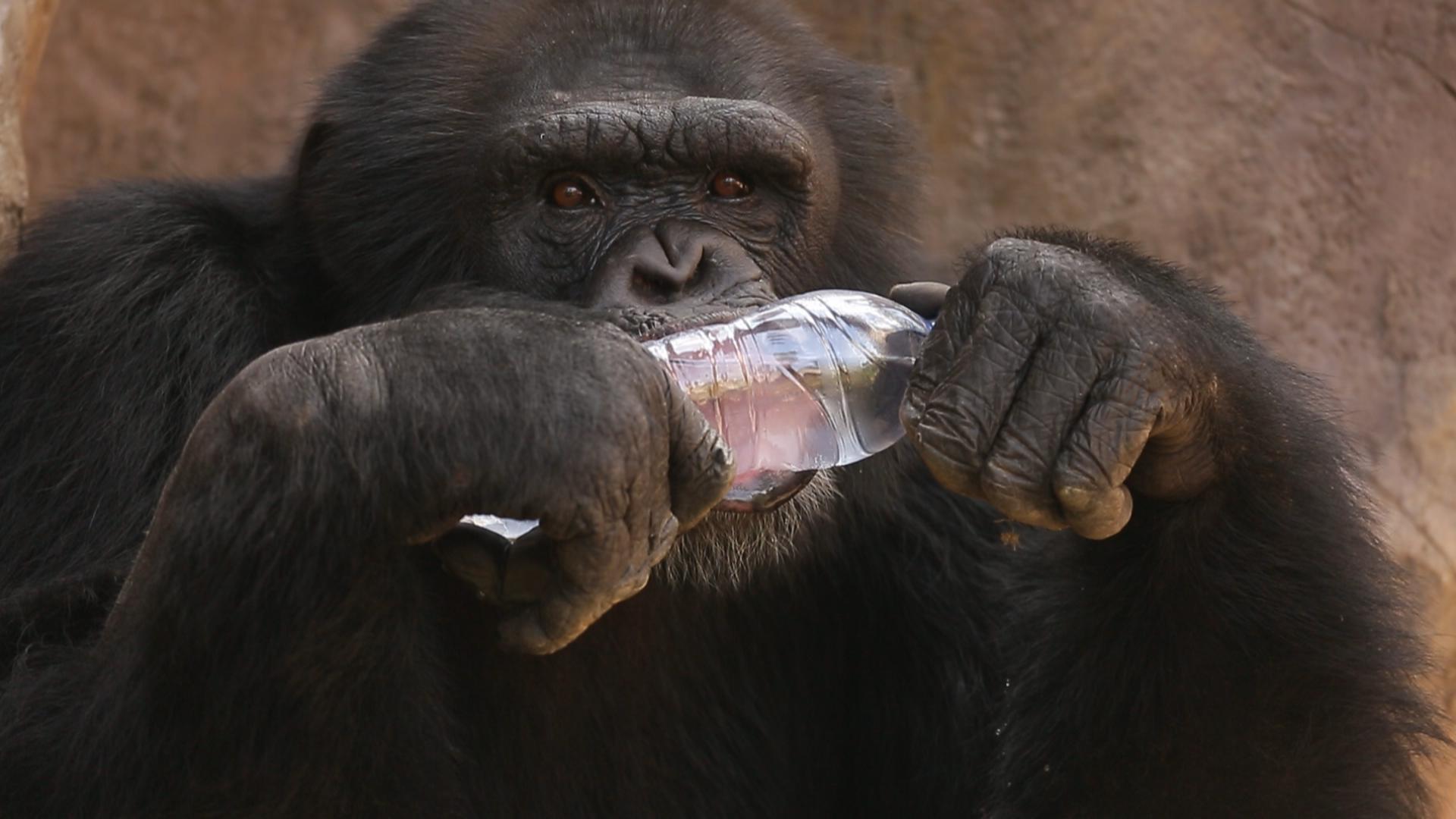 瓶盖粘贴画动物