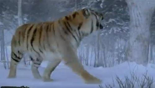 《智取威虎山》打空气老虎