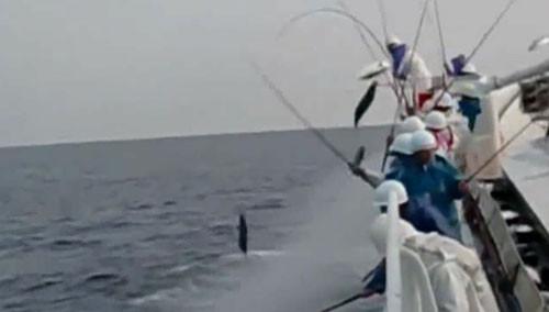 震惊!日本渔船捕鱼居然如此高效