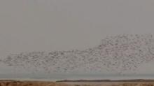 第八届洞庭湖国际观鸟节将于12月11号到13号在岳阳市举办